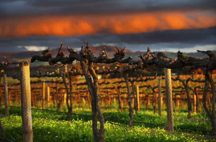 The Barossa by Dragan Photography